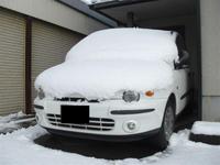 雪の白ムル.JPG