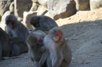 N村様お猿.jpg