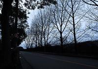 s-冬の並木.jpg