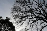 s-冬の木.jpg